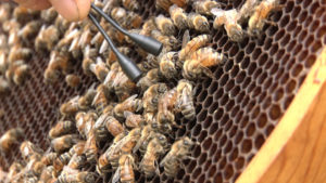 Bee Sharp HoneyBee @ FOSS Theater