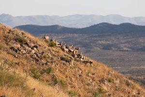 Return of the Desert Bighorn @ Colorado Public Television Theater