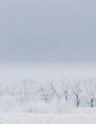 FloydSo-Snow-study-1_1