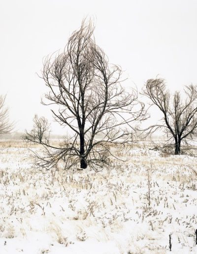 WeemsLi-Trees-In-Winter_1