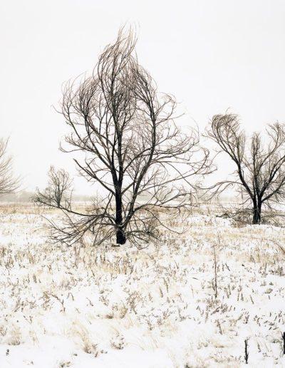 Trees in Winter - Liza Weems