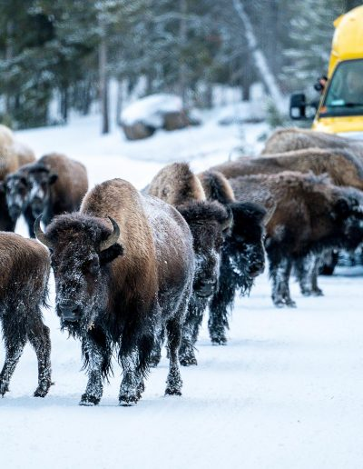 Crowding The Bison - Michael Holtby